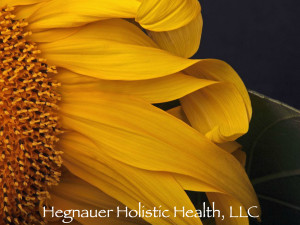 Hegnaur Holistic Health, LLC